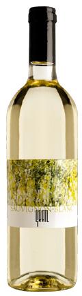 Sauvignon Blanc Alexandra 2017 / Gratl